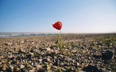 Resilienza: la forza sta nella vulnerabilità